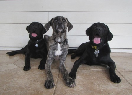 Posing: Reardon, Benji, Capone