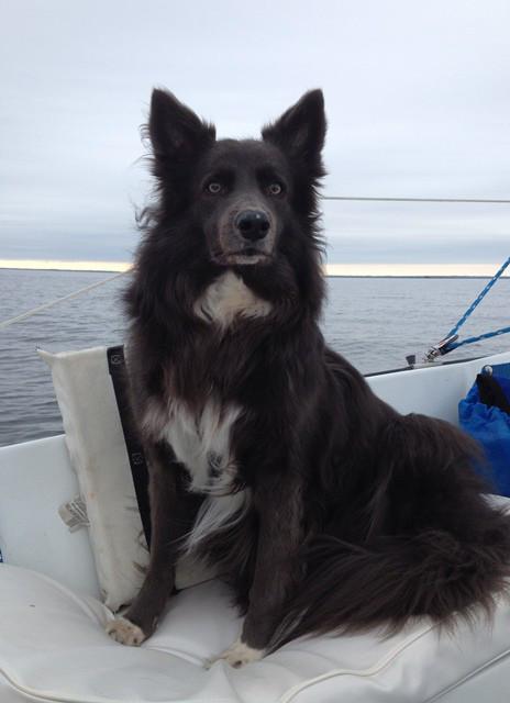 sailingf