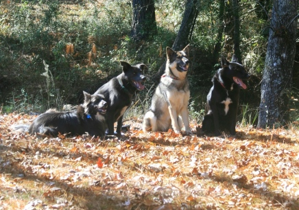L to r: Zoe, Coco, Sashia, Bo
