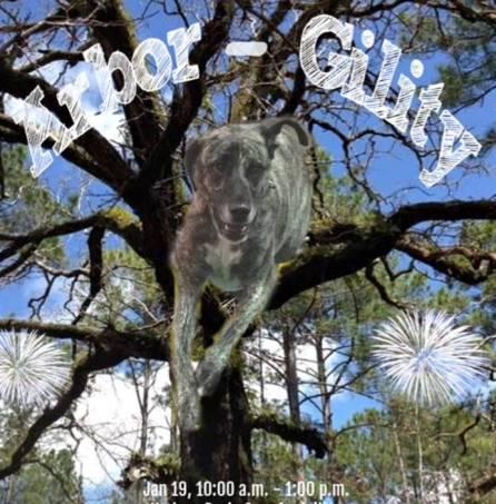 Arbor-gility photo.jpg