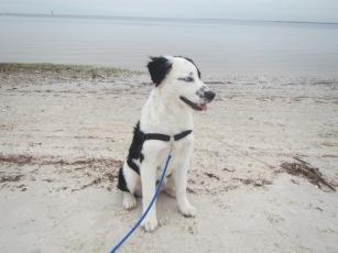 Sky's first beach experience
