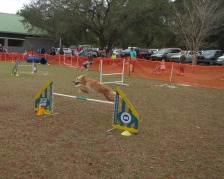 Agility Furriend Lacie