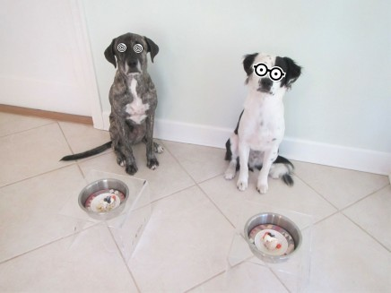 Pawlease, let us eat!
